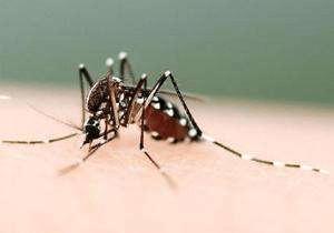 秋后蚊子猛如虎 有关蚊子的4大谣言你信过几个?