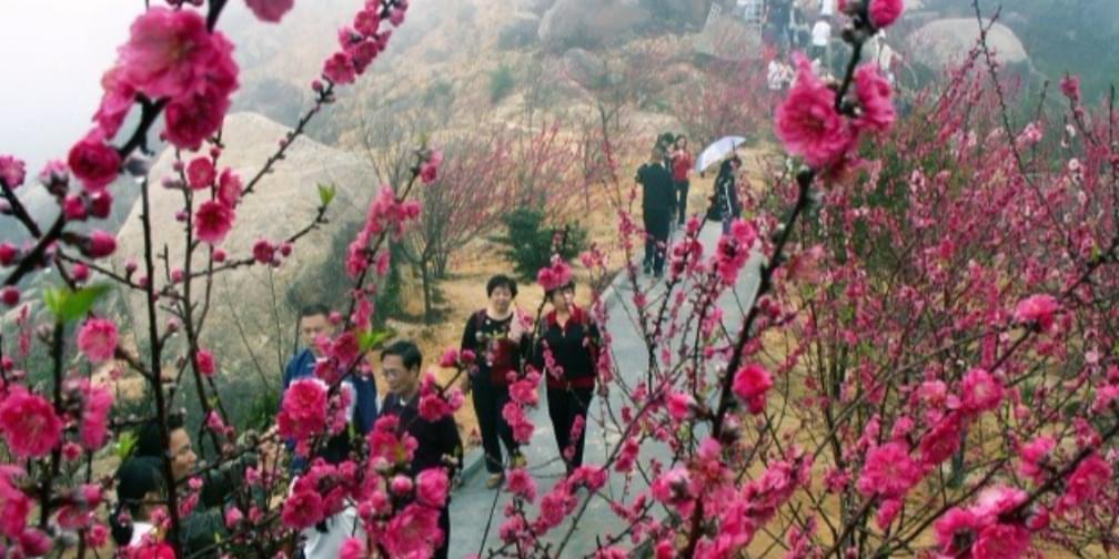 待到山花烂漫时,去濠江看桃花节!