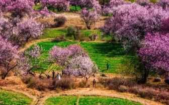 三月去西藏林芝看桃花最佳观赏地点