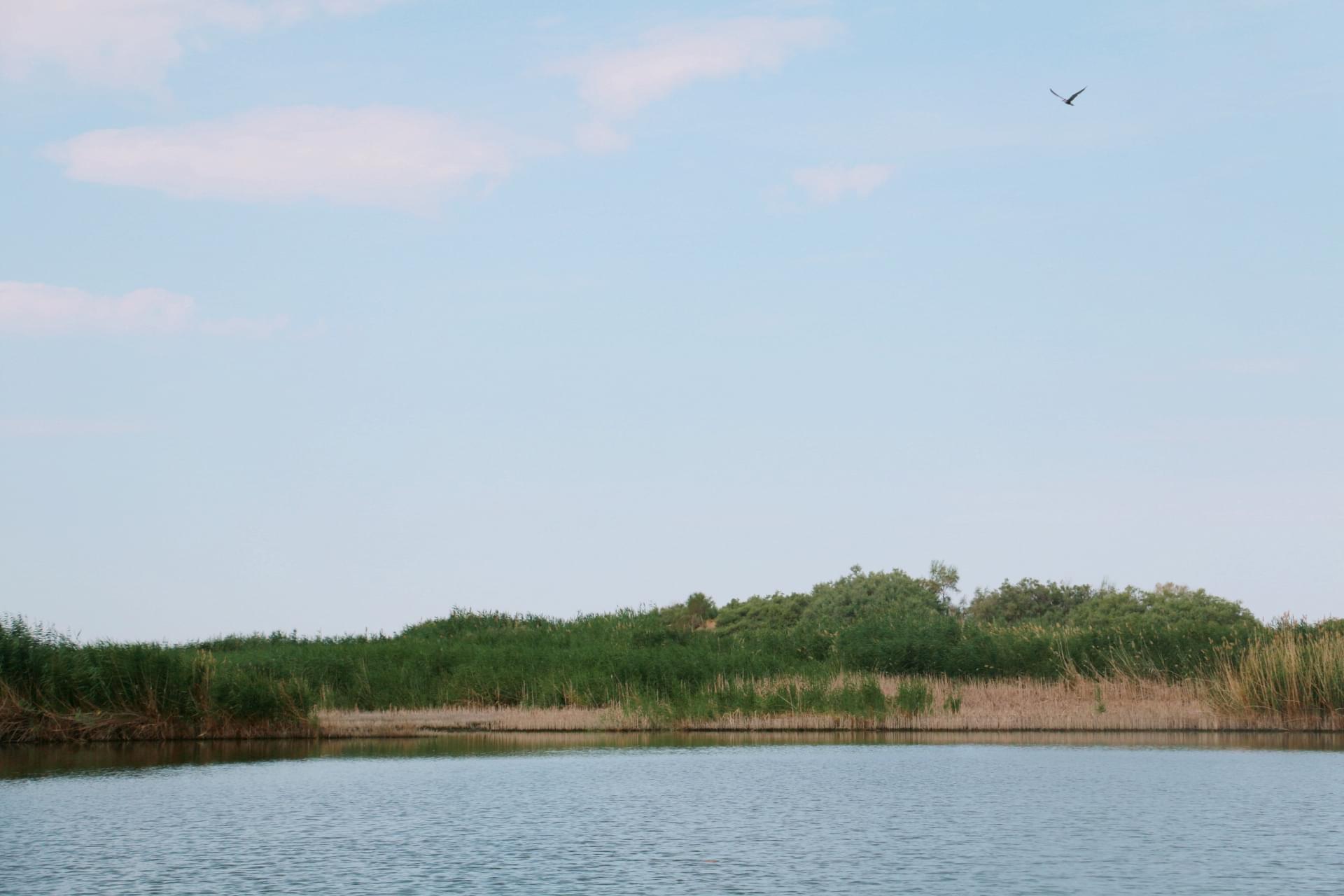 五家渠千岛湖湿地水草丰美 景色怡人
