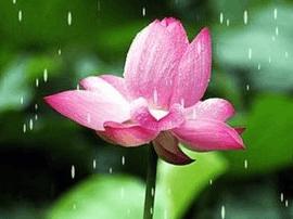 福州未来几天变凉高温仅33℃上下 周末可能有雨