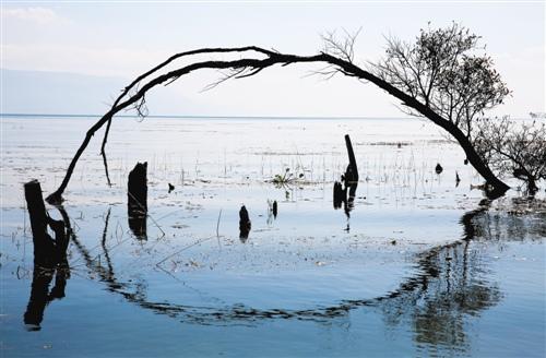 大理旅游度假区三年投入洱海保护资金6个亿