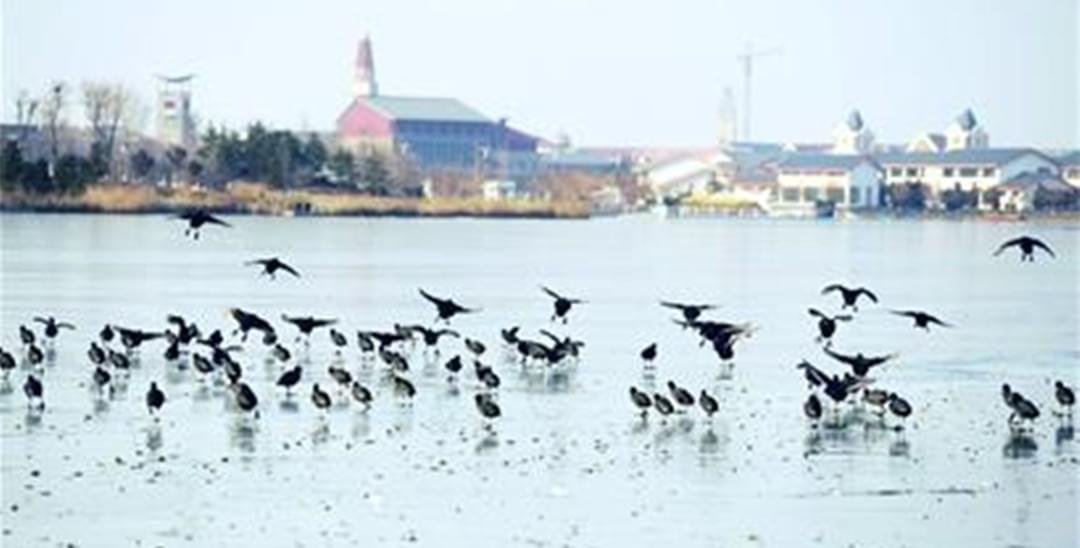 青岛两湿地入选山东最美 面积均超10万公顷