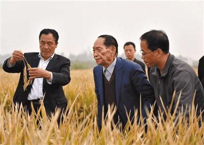 媒体揭秘袁隆平团队是如何创水稻亩产纪录的?