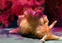 科学家把海螺的记忆移植给了另一只 未来人也可