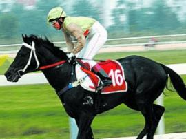 武汉国际赛马节:山西成全国速度赛马锦标赛最大赢家