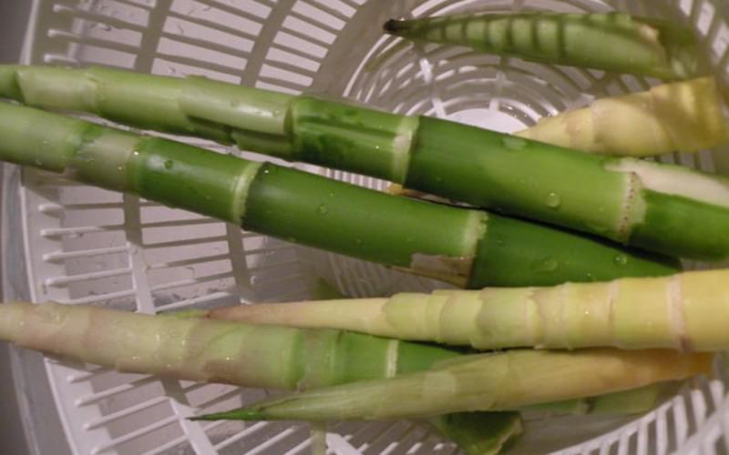 这个春天,我因为有了竹笋吃,而感到相当幸福。(作者供图)