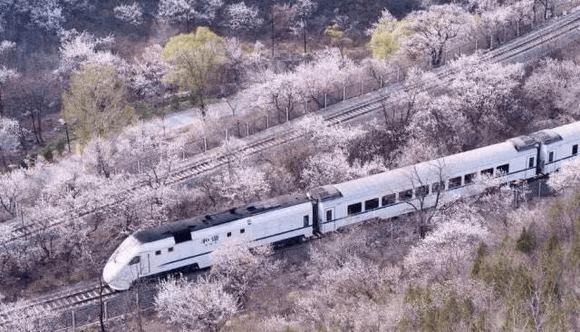 搭上春天的列车 去花海环游
