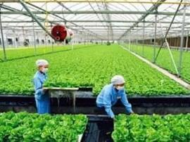 九台区扶持特色项目 促进农民增收致富