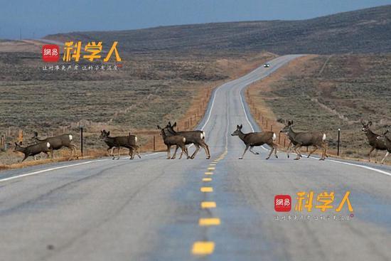 陆地哺乳动物迁徙之旅