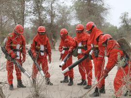 新疆将开展为期10个月的保护胡杨林专项行动