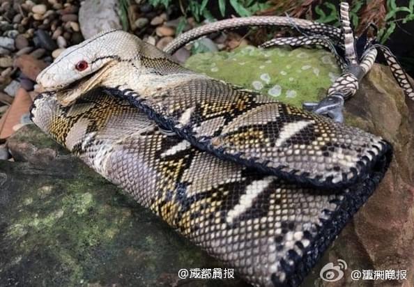 真蛇皮钱包带蛇头 世界仅有一个