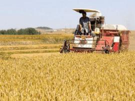河北备足80亿元资金支持小麦最低收购价收购