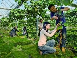 宜昌13个地方上榜省休闲农业示范点