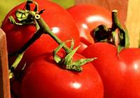 """CRISPR编辑技术能""""定制""""农作物:最大程度提高产"""