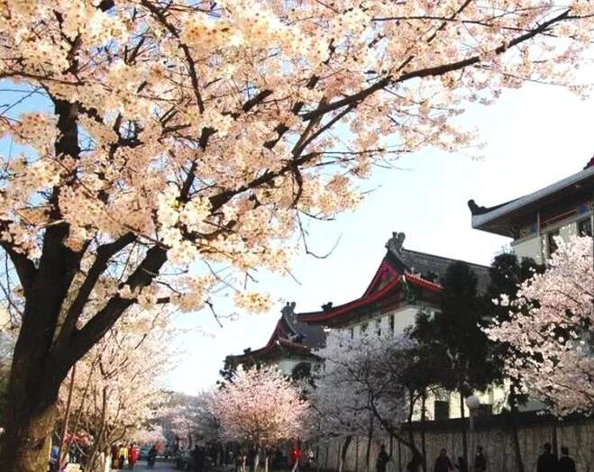 南京最有情调的小路,全去