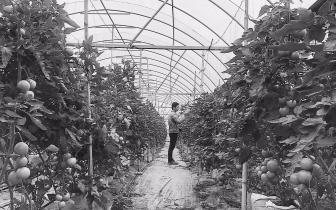 仙游创建农产品质量安全县:用质量锻造品牌