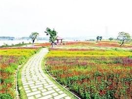 花海公园将现芦苇荡景观 6月前整个公园全部完工