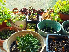 家中多盆植物就能少买药 四个清洁失误易致病