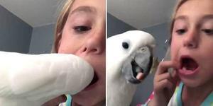 小女孩让鹦鹉帮其拔掉松动乳牙