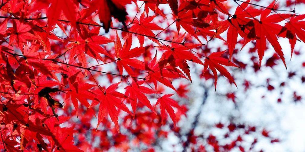 山西运城:秋高气爽赏红叶 空中俯瞰五彩斑斓