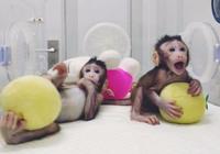 全球首只体细胞克隆猴在中国诞生 外国专家怎么