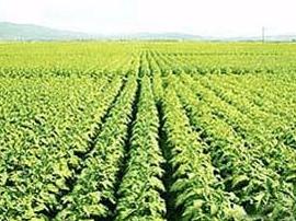 """灵宝市苏村乡:开""""板凳会""""谋划明年烟叶生产"""