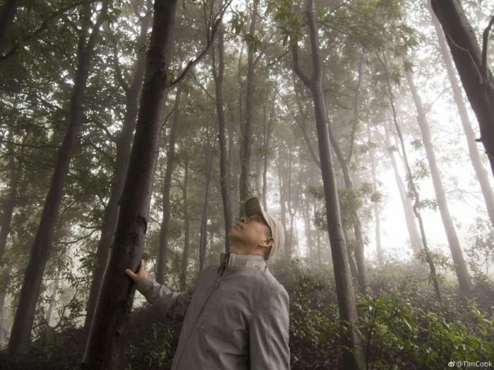 库克发微博庆祝植树节,呼吁保护森林资源的照片 - 5