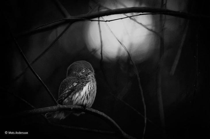 野外生态摄影大赛2016 获奖作品赏析