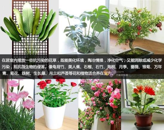 生活大爆炸:这些花颜值很高但室内最好别养