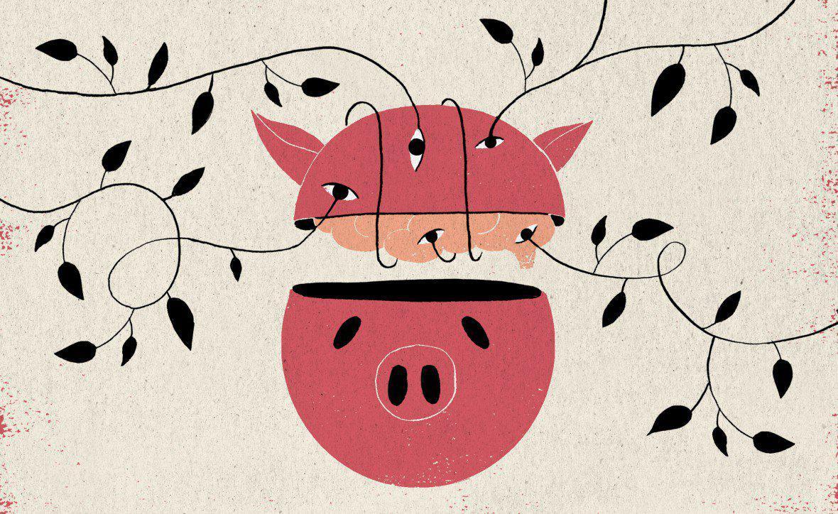 科学家让猪脑在体外存活了36小时 但或许并无意识