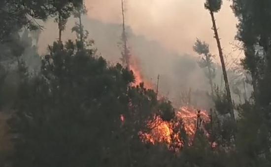 大理苍山发生森林火灾 正全力扑救