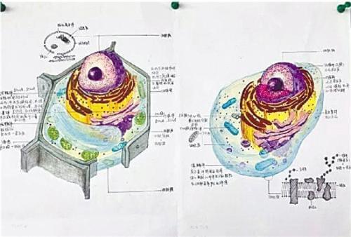 有位同学还在作品右下角画了一幅细胞膜结构图,细心程度也是没谁了