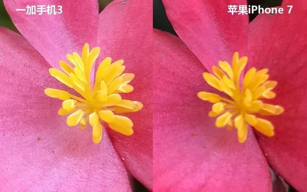 iPhone 7拍照对比一加3的照片 - 16