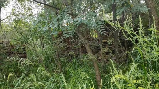 1998年以前,李淑贤家在马架沟里的家。十几年过去了,房屋已被草树掩没。 图片来自视频截图
