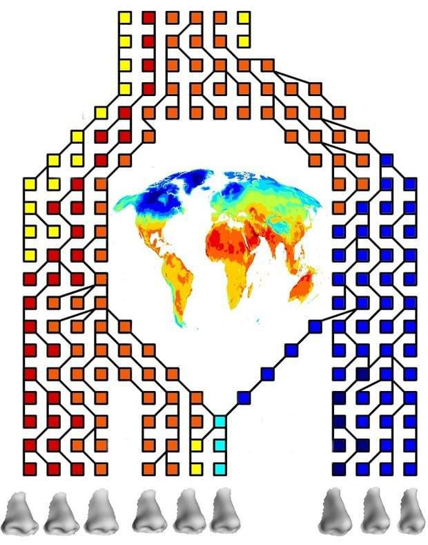研究称鼻子形状是自然选择的结果 为应对不同气候而生
