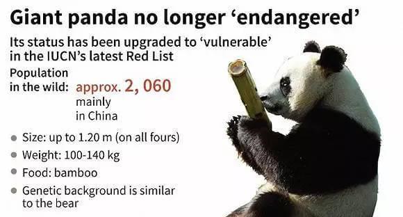 大熊猫不再濒危网友激动 专家称形势仍严峻