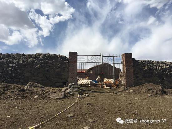 ▲6月4日,卢九林家的牛棚。新京报记者高敏摄