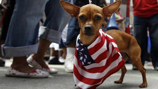 美洲本土狗早已灭绝,但DNA却活在肿瘤中