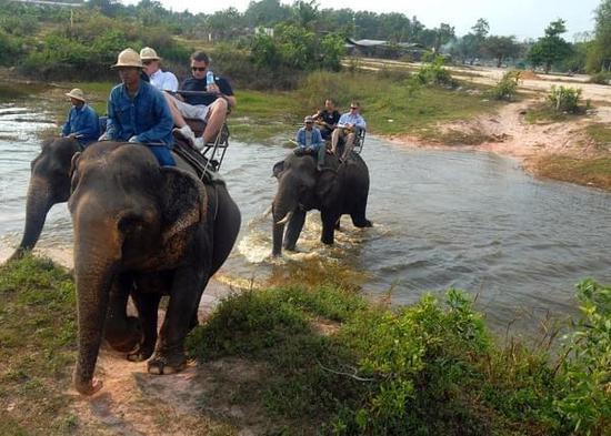 大象踩踏事件背后的残酷真相:驯象师用刀和象钩让象屈服