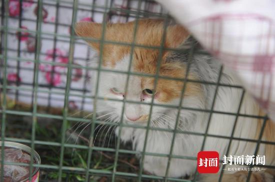 猫咪被困10米高架桥两年终救下 靠6旬老人徒手扔食活下来