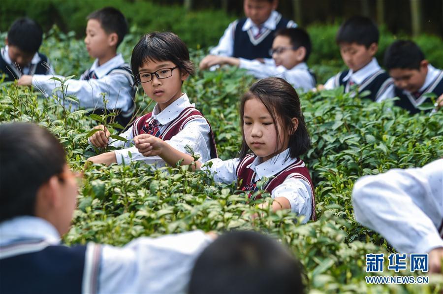 """(文化)(2)乡村小学举办校园特色""""茶文化日"""""""