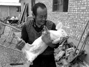 """贫困户发养猪视频成""""网红"""" 还高票当选村干部"""