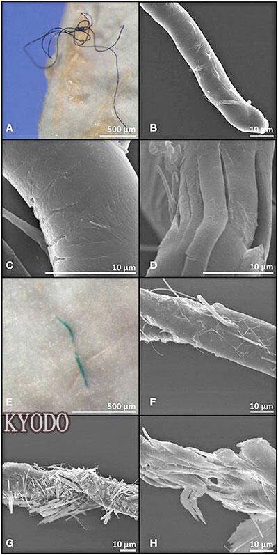 可怕!研究团队发现大西洋73%深海鱼体内有塑料微粒