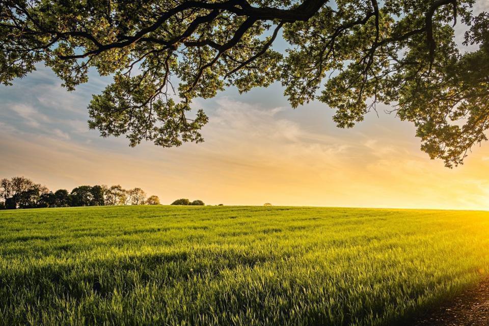 AI正在农业领域崛起 它真能帮助养活整个世界吗?