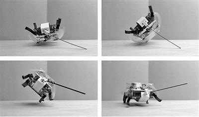 带尾巴蟑螂机器人:能轻松翻转 适应各种环境