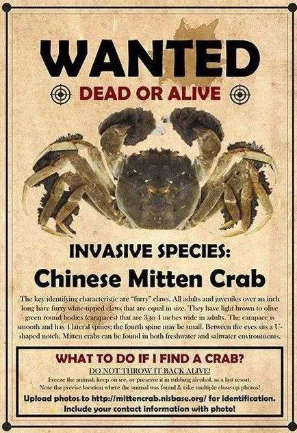 大闸蟹在美被下通缉令!中国吃货沸腾:洋葱蒜已备齐