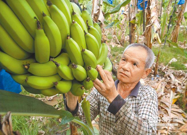 台湾香蕉价格骤降蕉农怒批台当局 台官员这样反驳