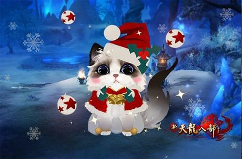 圣诞布偶猫快快领回家