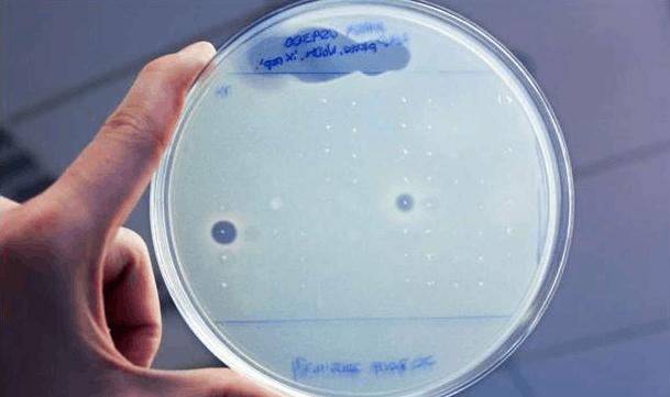 科学家从人体细菌基因组中发现两种新型抗生素的照片